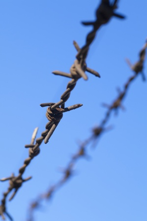 barbed wire on the sky background photo