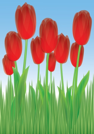 nine tulips in the grass with clear sky background photo