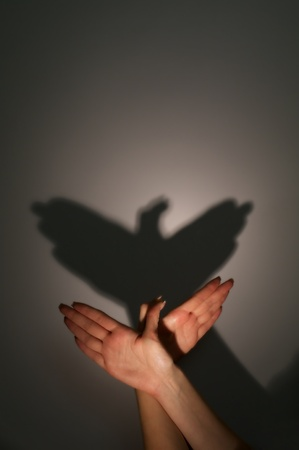 silhouette shadow of eagle bird from young womans hands