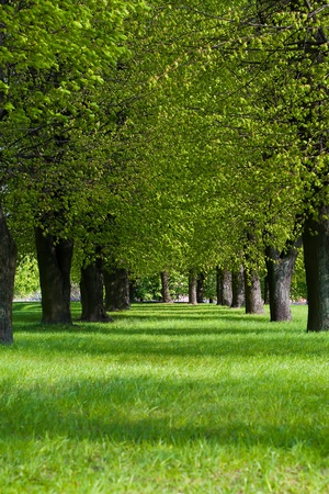 spring green lane in the park