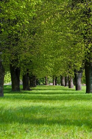 spring green lane in the park Stock Photo - 12120162