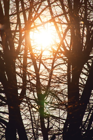 bright sun rays in the trees branches Stock Photo - 13340605