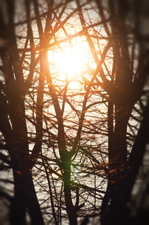 bright sun rays in the trees branches Stock Photo - 13340604