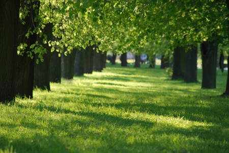 spring green lane in the park