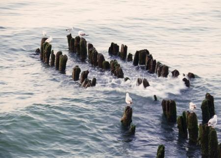 seagulls sitting on breakwater in evening sea Stock Photo - 15865157