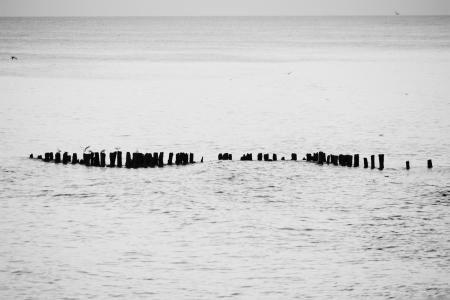 seagulls sitting on breakwater in cloudscape sea Stock Photo - 15865178