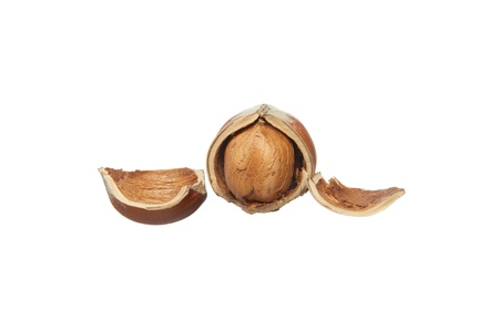 broken hazelnut with pieses of peel isolated on white background Stock Photo