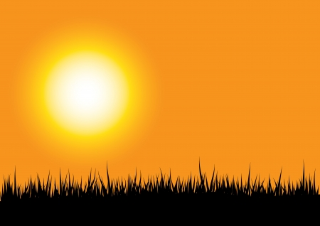 grass silhouette on orange sunset background Vector