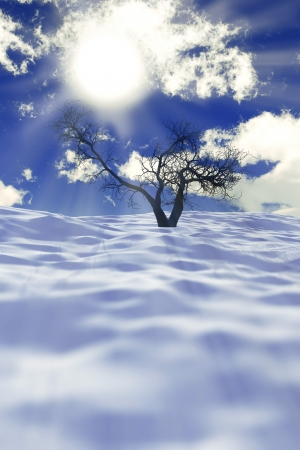 one dry tree on snow field with sun rays and clouds photo