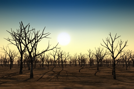 old dried forest during a drought sunset Stock Photo - 17531931