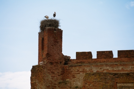 storks in a nest at red bricks roof ruins photo