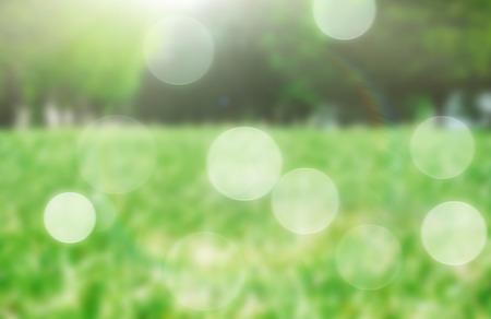 green spring grass blurred background
