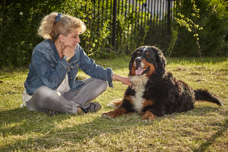 bernese mountain dog: mature woman with her bernese mountain dog
