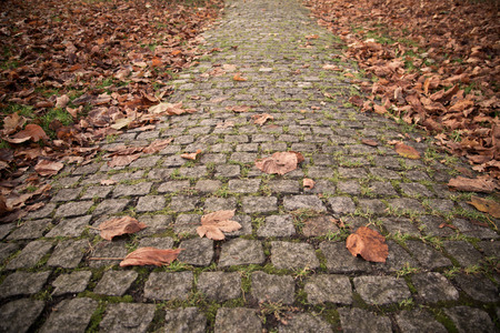 Old Cobbled Stones Road Close up with Autumn Leaves