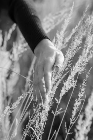 young female hand over autumn dry grass, monochrome Stock fotó