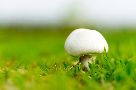 close up white mushroom with green grass