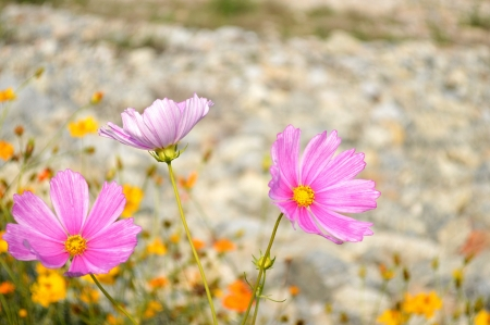 the pink flower photo