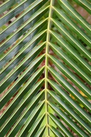 close up of palm leaf in nature background