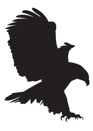 goshawk: eagle vector images