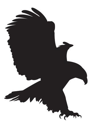 aguila calva: imágenes Eagle Vector
