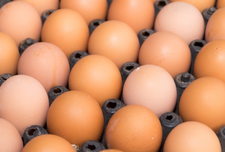 Closeup of many fresh brown eggs in carton tray photo