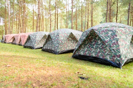 many camping tent on grass in forest for tourist