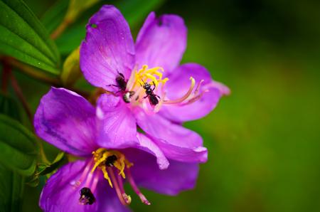 stamen wasp: Bees on purple flower