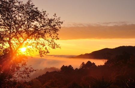 reveal: Lighting of sun rise reveal sparkling  and mist Stock Photo