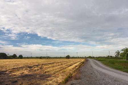 Fields after harvest and preparation plant.