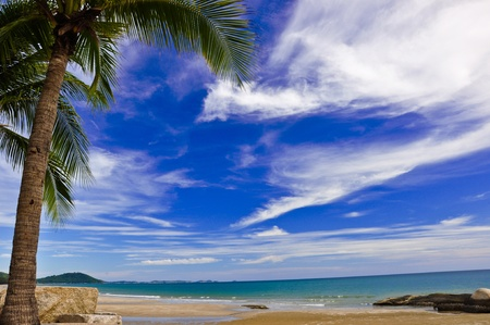 palm tree on white sand beach photo