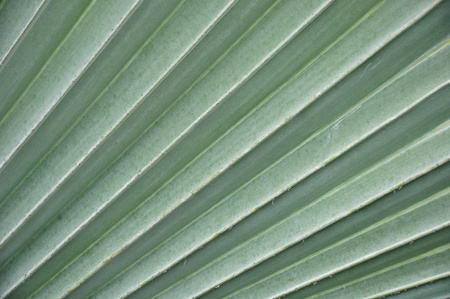 splotchy: leaf detail