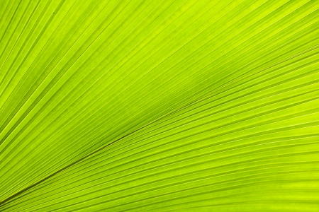 Green palm tree leaf  Background photo