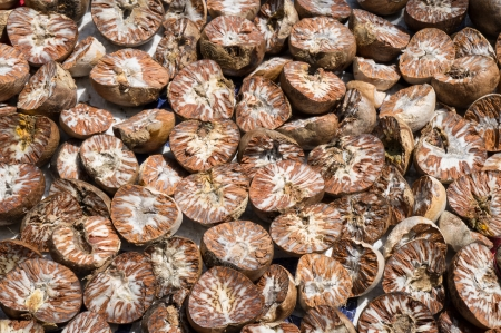 Dried Betel Nut or Areca Nut  photo