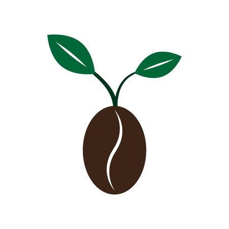 new plant: Coffee new born growing bean seed plant with leaves on white background vector illustration