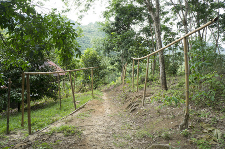 rubber sheet: empty bamboo hanger for rubber sheet in garden