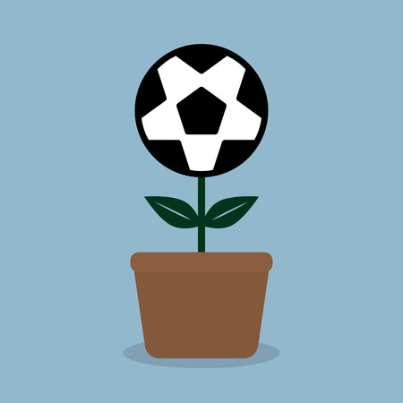 plant pot: soccer ball flower plant in pot