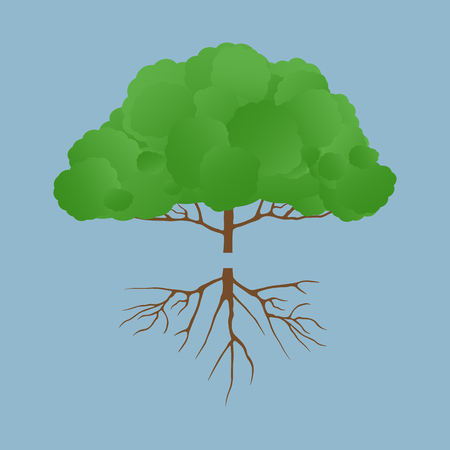 green tree with root vector illustration