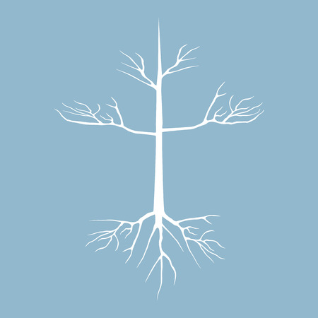 dry: dry tree with root vector illustration Illustration