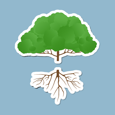 gree tree with root illustration