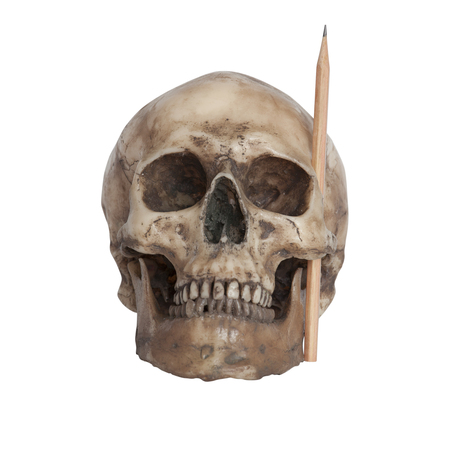 Human skull with a pencil at cheekbone for creative idea concept isolate on white background