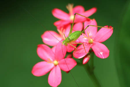 Small grasshopper on flower closeup