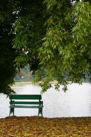 Garden bench in beautiful garden