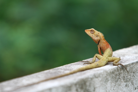 Portrait of lizard on wall