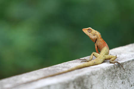 catchlight: Portrait of lizard on wall