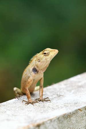Portrait of lizard on wall