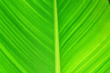 The close up leaf photo