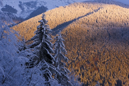The trees covered by snow in the mountains. The sun is coming down. Carpathian mountains, Ukraine. photo