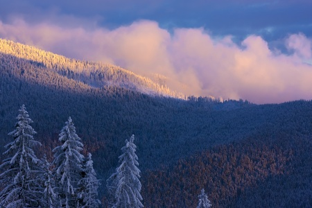 The trees covered by snow and the pink cloud over the mountains. The sun is coming down. photo