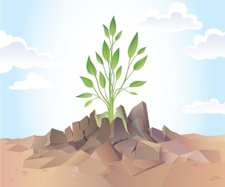 reforestaci�n: El joven reto�o verde se est� rompiendo el suelo seco y duro.