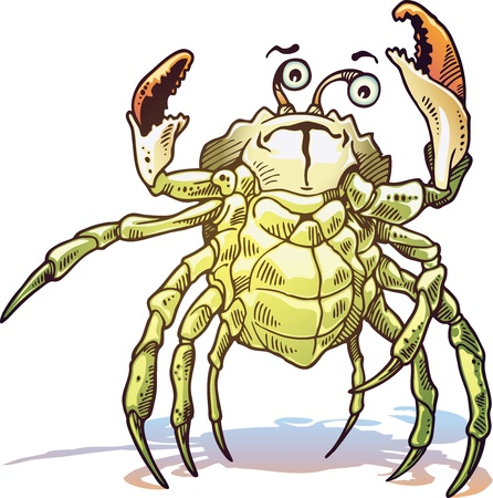 The illustration of the sea crab. He looks at camera and gets up his claws and he looks dangerous. Vector